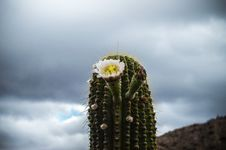 Free Close-up Photography Of A Cactus Royalty Free Stock Image - 109912296