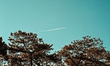 Free Green Leaf Trees Under Blue Sky Royalty Free Stock Images - 109912399