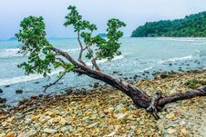 Free Green Tree Beside Seashore Near Green Mountain Royalty Free Stock Images - 109912469