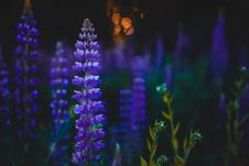 Free Depth Of Field Photography Of Purple Flowers Stock Photography - 109912482