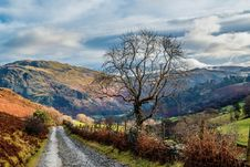 Free Photo Of Empty Road Between Trees Near Mountains Royalty Free Stock Image - 109912616