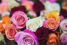 Free Assorted Color Of Rose Flowers Royalty Free Stock Photography - 109912617