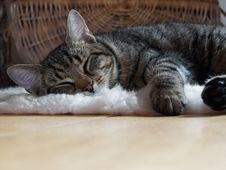 Free Brown Tabby Cat Lying On Shag Rug Royalty Free Stock Photo - 109912655