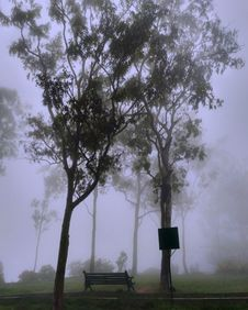 Free Park Covered With Fog Royalty Free Stock Photography - 109912657