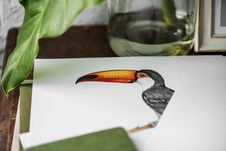 Free Black And White Tucan Photo Stock Images - 109912804