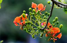 Free Focus Photography Of Orange And Green Flowers Stock Photo - 109912810