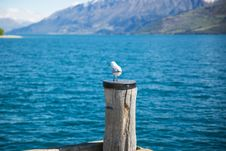 Free Depth Of Field Photography Of White Gull On Top Of Brown Wooden Pole In Front Of Body Of Water Royalty Free Stock Image - 109912936