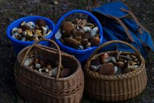 Free Four Basket Of Mushrooms L Stock Photography - 109912952