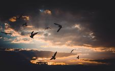 Free Flock Of Birds Flying Above Sky During Sunset Stock Images - 109912984