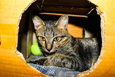 Free Black Cat Royalty Free Stock Photos - 109913058