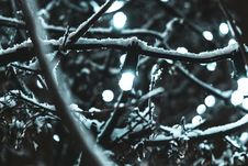 Free String Lights Covered By Snow Stock Photos - 109913133
