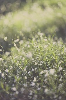 Free Green Grass Lawn Stock Images - 109913174