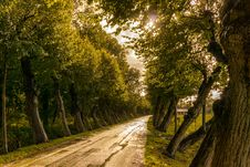 Free Road In Between Trees Stock Photo - 109913290