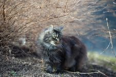 Free Photo Of Cat Beside Leafless Plant Royalty Free Stock Photography - 109913297