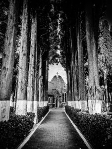 Free Pathway Through Cathedral Surrounded By Trees In Grayscale Photography Royalty Free Stock Images - 109913309