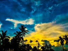 Free Silhouette Of Palm Trees Under Blue And Yellow Sky Stock Photos - 109913323