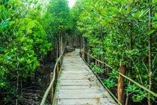 Free Brown Wooden Bridge Beside Green Leafy Trees Royalty Free Stock Photography - 109913367