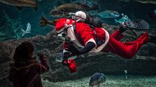 Free Man In Santa Claus Costume With Diving Gear Inside Aquarium Royalty Free Stock Photo - 109913455