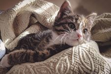 Free Brown Tabby Cat Lying Down On Gray Bed Sheet Stock Photos - 109913533