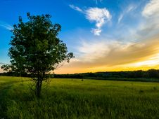 Free Green Tree Under Blue And White Sky Royalty Free Stock Photos - 109913548
