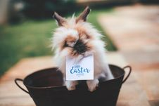 Free Hare On Basket With Happy Easter Card On Mouth Stock Image - 109913551