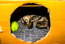 Free Gray And Brown Kitten In Cardboard Box Stock Images - 109913614