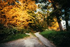 Free Pathway Surrounded By Trees Stock Images - 109913624