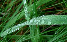 Free Water Droplets On Green Leaf Stock Photo - 109913640