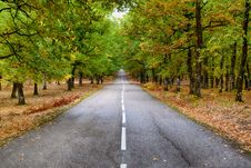 Free Grey Concrete Road In The Middle Of Dried Leaves Stock Photos - 109913663