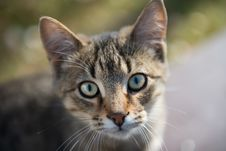 Free Brown Tabby Cat Stock Image - 109913771