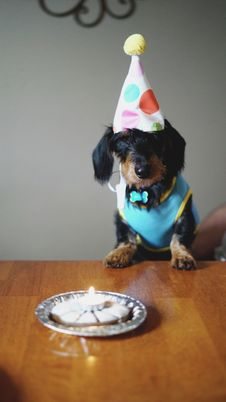 Free Black And Brown Long Coated Dog Birthday Royalty Free Stock Photo - 109913795