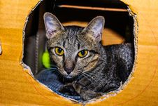 Free Brown Tabby Cat Inside Cardboard Box Stock Photos - 109913803