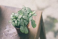 Free Green Leaf Plant On Brown Pot Above Wooden Table Royalty Free Stock Photo - 109913875