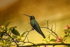 Free Shallow Focus Photography Of Green Humming Bird Royalty Free Stock Photo - 109913925
