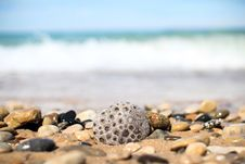 Free Gray And Brown Pebbles Near Sea Royalty Free Stock Photos - 109913978