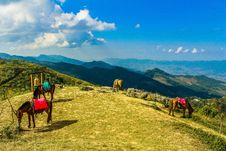 Free Four Brown Horses In Mountain Under Blue Skies Stock Image - 109914001