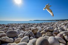 Free Seagull Soaring On Top Of Pebble Field At Beach Royalty Free Stock Photo - 109914005