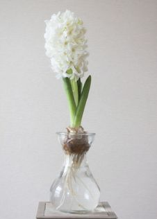 Free Photography Of White Flower On Clear Glass Vase Stock Image - 109914121