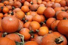 Free Photography Of Pile Of Pumpkins Stock Photo - 109914150
