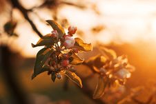 Free Selective Focus Photography Of White Orange Blossom Flowers Royalty Free Stock Photography - 109914157