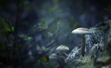 Free White Mushrooms Digital Wallpaper Stock Photo - 109914270
