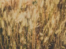 Free Dried Grass Field Royalty Free Stock Photography - 109914297