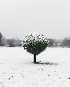 Free Snow Covering Green Leaf Plant And Grass Field Royalty Free Stock Image - 109914316