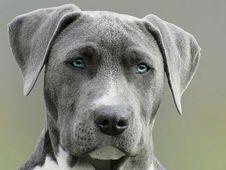Free Close Up Photography Of Adult Black And White Short Coat Dog Stock Image - 109914381