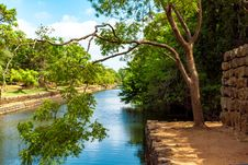 Free Photo Of Green Leaf Tree Beside River Royalty Free Stock Images - 109914449