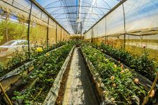 Free Fish Eye Photography Of Gardens Royalty Free Stock Images - 109914469