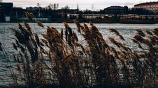 Free Brown Grasses Near Body Of Water Across Houses Stock Photography - 109915122