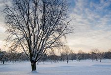 Free Leafless Tree Covered In Snow Royalty Free Stock Photography - 109915267
