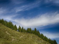 Free Green Pine Trees Under Clear Blue Sky Royalty Free Stock Image - 109915296
