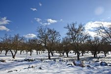 Free Bare Trees Over Snow Ground Under Blue Cloudy Sky Royalty Free Stock Photo - 109915355